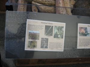 Example of braille/print information on an exhibit