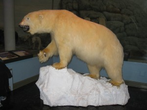 A taxidermied polar bear perched on styrofoam ice.