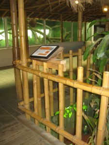 Bamboo fencing in the great apes exhibit.