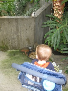 Peanut checks out some birds in the rainforest.