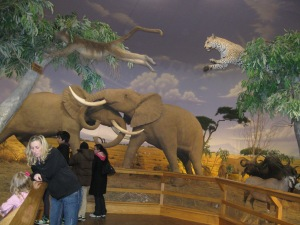 The African animals diorama at Cabela's.  A leopard is leaping after a baboon overhead, and two elephants wrestle in the background.