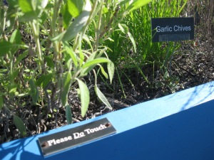 "A close-up of the herb garden showing a brailled plant label and the ""Please Do Touch"" sign"