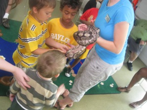 A woman in blue holds a ball python out to two little boys wearing bright yellow shirts. A third little boy in a striped shirt faces the snake with his back to you.