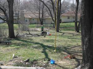 This is our back yard.  Peanut and Efrit are towards the back, behind a large fallen tree branch.