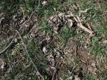 A photo of some of the ground in our yard, featuring some of the branches Peanut scanned the ground to find.