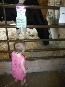 Sprout meets a very pregnant dairy cow.