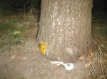 This gnome home is a bit harder to find--look for the bright yellow door.