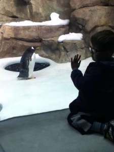 Peanut meets a penguin.