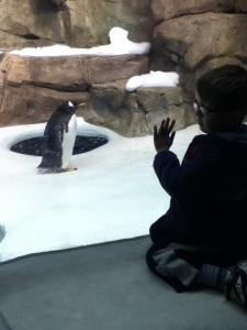 Peanut meets a penguin.