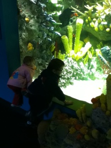 Peanut and Sprout by the coral reef tank.