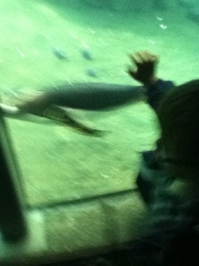 THIS CLOSE to a swimming penguin--beautiful.