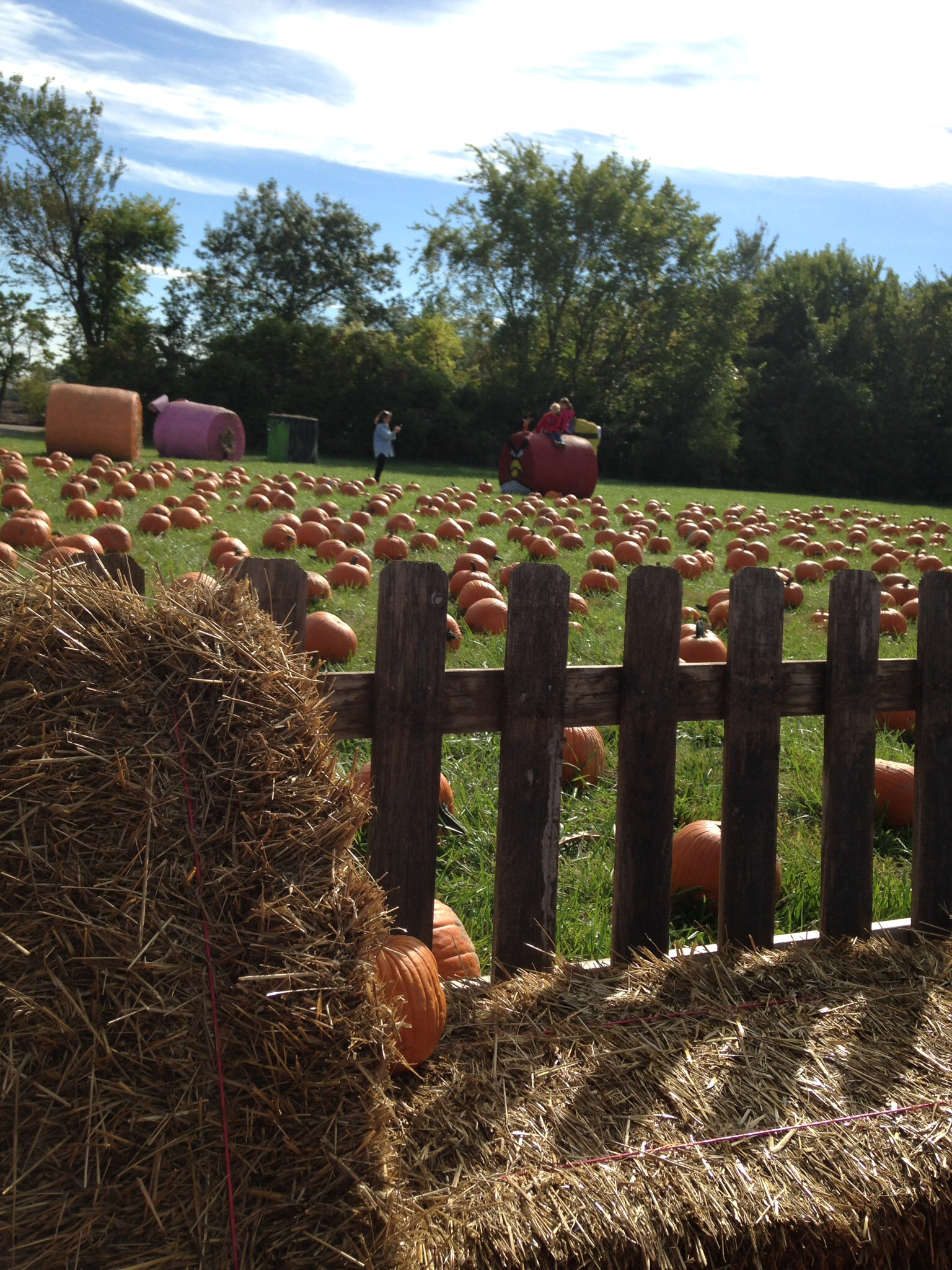 Pumpkin Patch at Suburban Lawn & Garden | Peanut and Phouka\'s Adventures